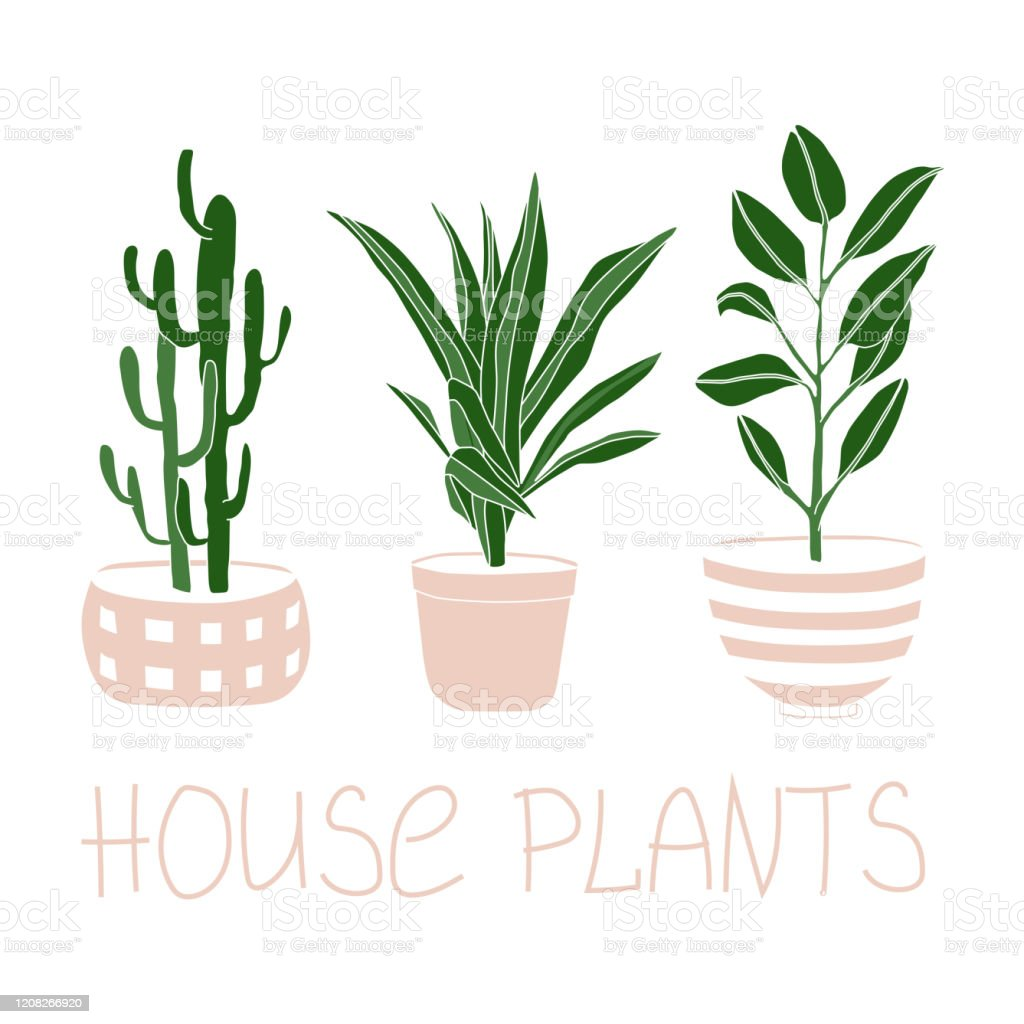 House Plants Illustration Set Home Flowers In Pots Cute Greenery Floral Vector Isolated On White Background For Business Logo Template And Posters Line Art And Flat Style Stock Illustration Download Image