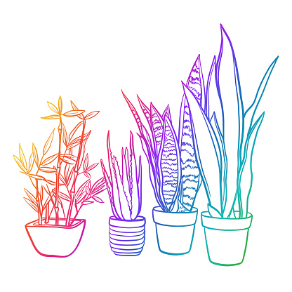 House Plants Rainbow