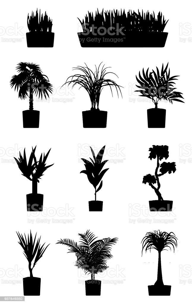 Silhouettes De Plantes De Maison Plante Cultivée En