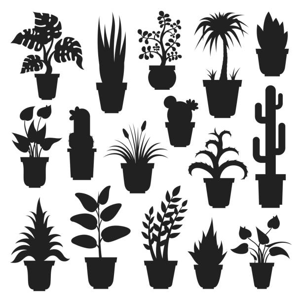 House plants silhouettes House plants silhouettes. Plant grown in a container, pot inside a house or flat, office air purification, ornamental green plant. Vector flat style cartoon illustration isolated on white background potted plant stock illustrations