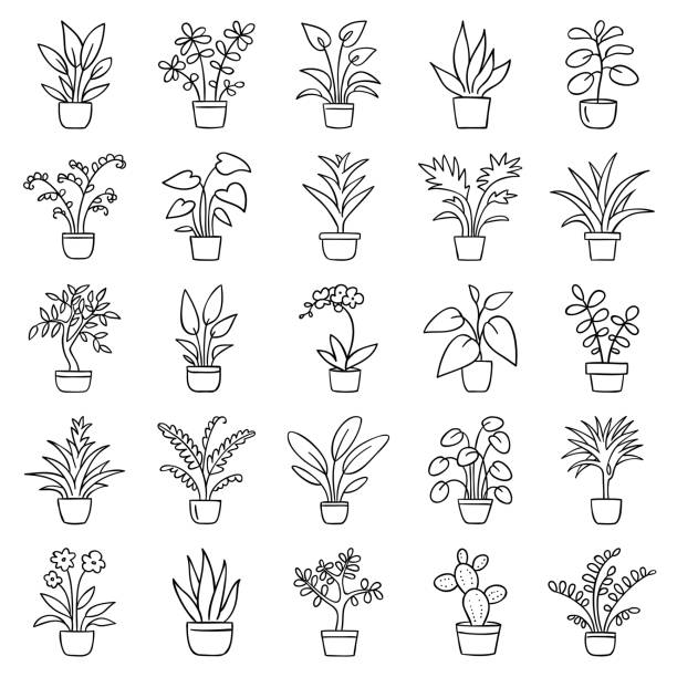 House plants Set of simple images of house plants in pots. Doodle icon set. Hand drawn vector illustration. potted plant stock illustrations