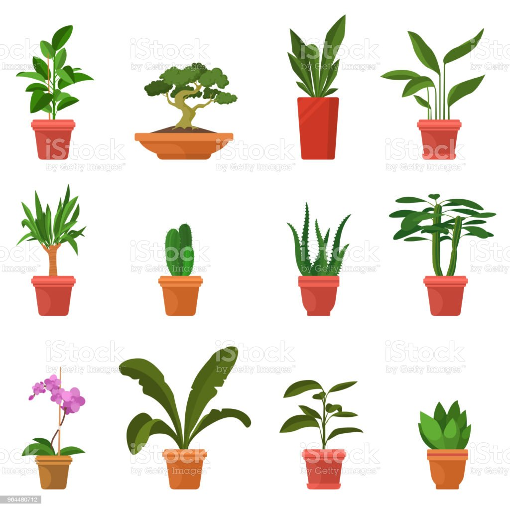 House Plants Vector Illustration Set Of Colorful Indoor Plants In Flat Cartoon Style Green Leaves And Inflorescences Decorative Elements For Home And Garden Eps 10 Stock Illustration Download Image Now Istock