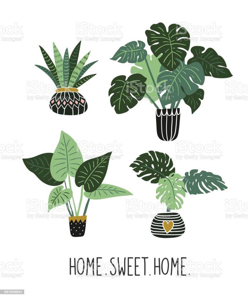 Pflanzen Mit Großen Blättern Tropischen Garten Gesetzt Isolierte