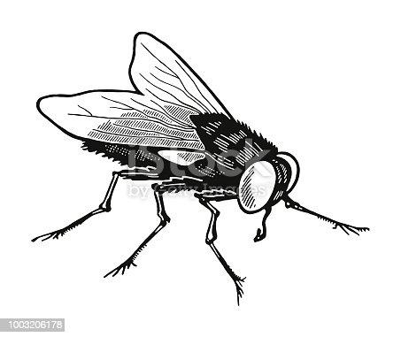 istock Housefly 1003206178