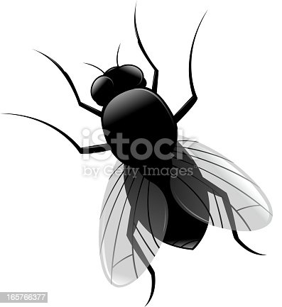 drawing of vector housefly illustrations.