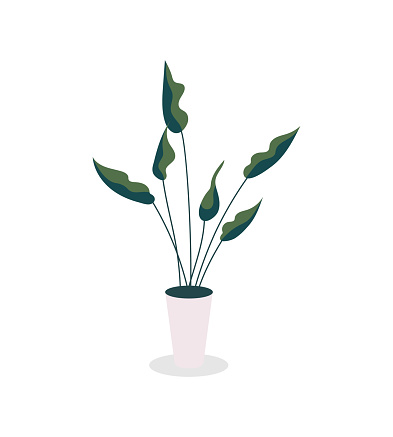 Houseplant flat color vector object