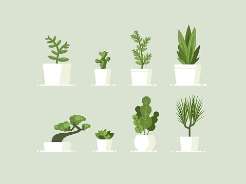 Houseplant in pots