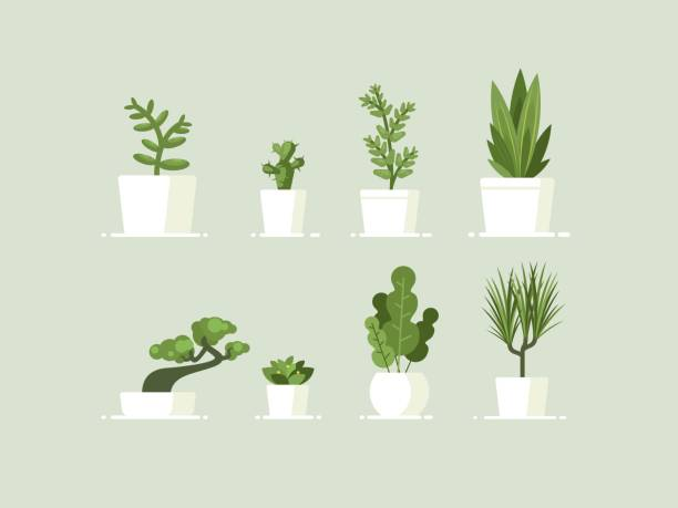 stockillustraties, clipart, cartoons en iconen met kamerplant in potten - plant
