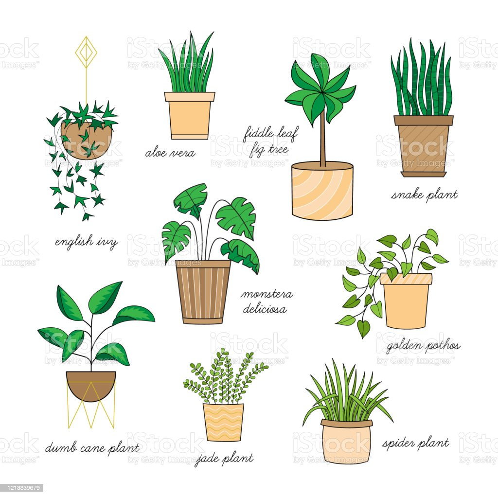 Houseplant Set Stock Illustration Download Image Now Istock