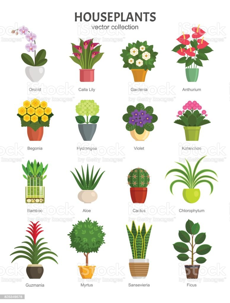 Houseplants collection. vector art illustration