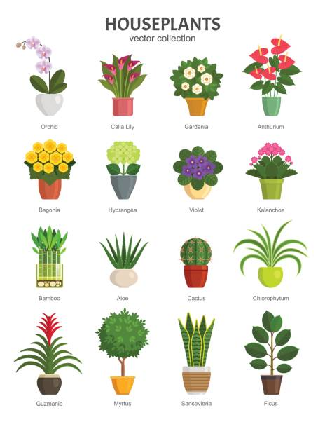 Houseplants collection. Vector illustration of most popular houseplants and flowers in multi-colored pots, such as Orchid, Calla Lily, Gardenia, Violet, Aloe and Cactus. Isolated on white. potted plant stock illustrations