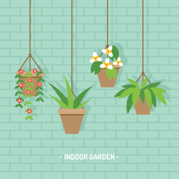 Houseplants in hanging flower pots vector illustration Vector illustration of hanging flower planters with various houseplants, indoor garden on brick wall background. potted plant stock illustrations