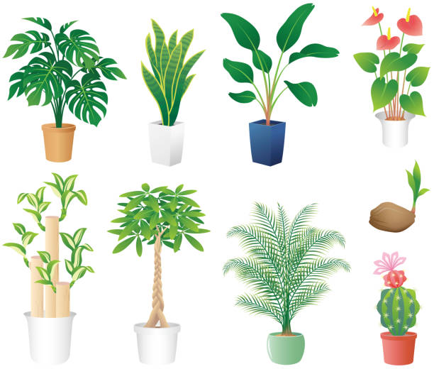 houseplants, isolated on the white background. interior bird of paradise plant stock illustrations