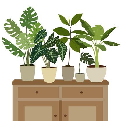 Houseplants on cupboard.