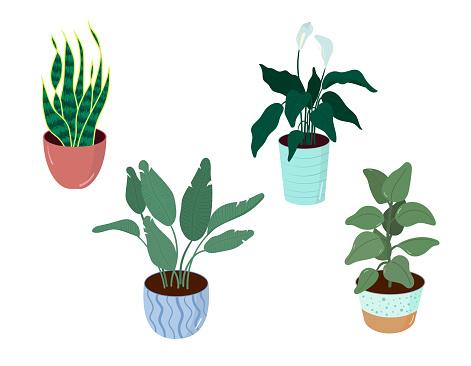 Houseplants vector art