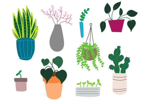 Houseplants Drawn vector houseplants kathrynsk stock illustrations