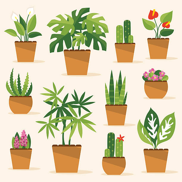 Houseplants. Vector Illustration A collection of indoor plants and flowers potted plant stock illustrations