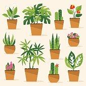 Houseplants. Vector Illustration