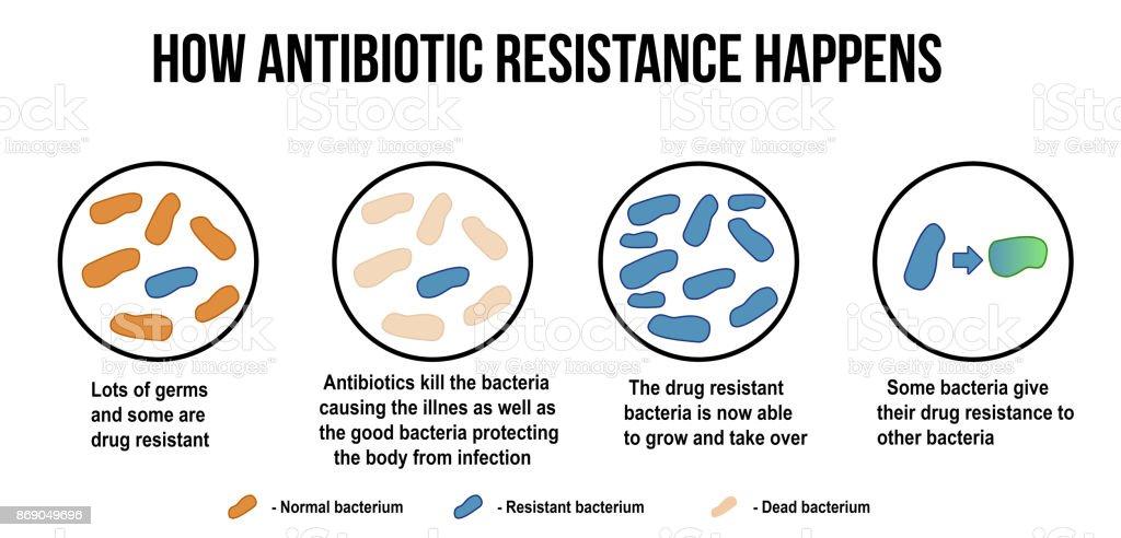 How Antibiotic Resistance Happens Diagram Stock Vector Art