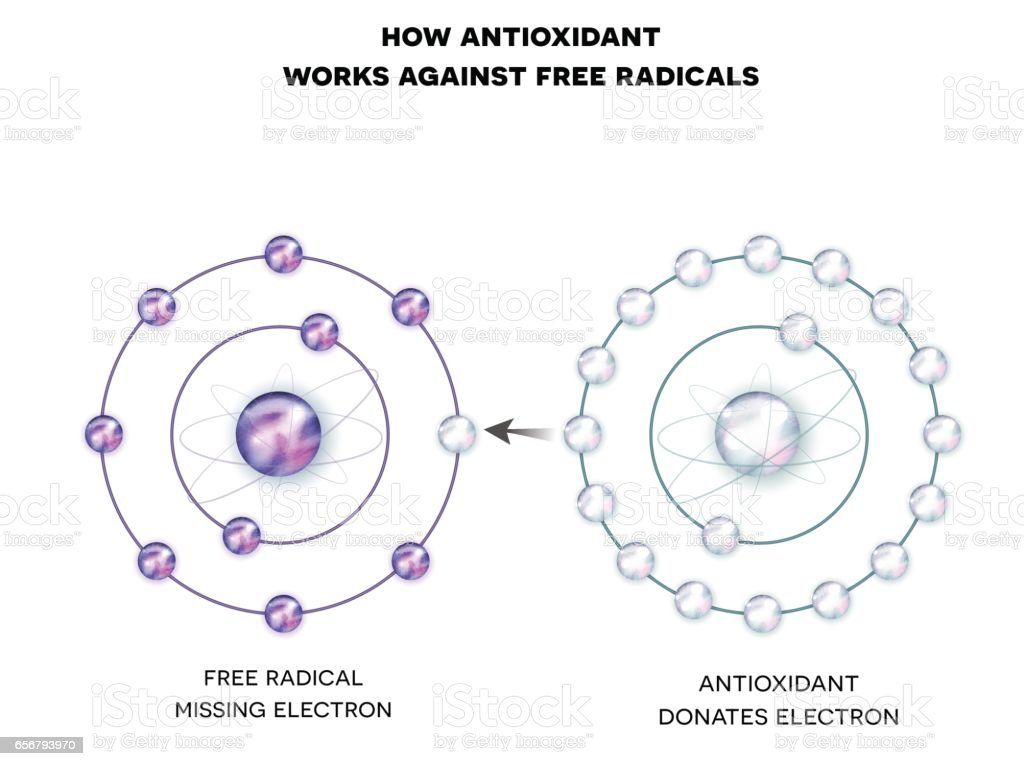 How antioxidant works against free radicals ベクターアートイラスト