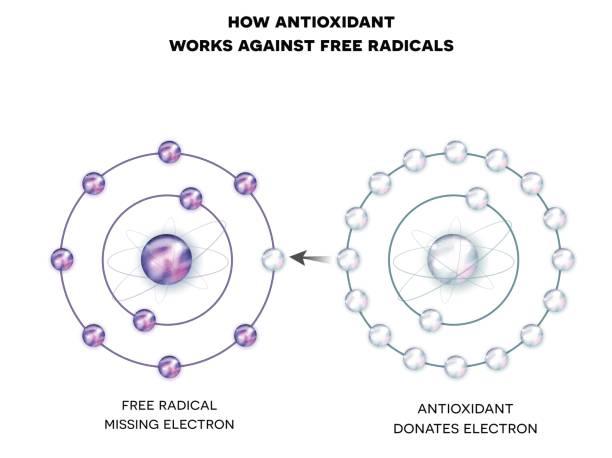 illustrations, cliparts, dessins animés et icônes de comment les antioxydants fonctionnent contre les radicaux libres - antioxydant