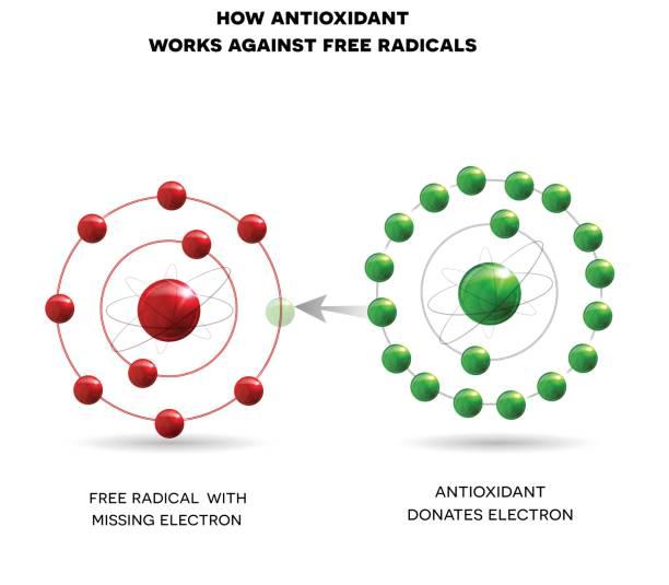 illustrations, cliparts, dessins animés et icônes de comment fonctionne l'antioxydant - antioxydant