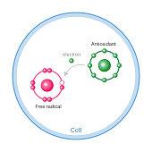 How Antioxidants Work On Free Radicals Damage. Vector illustration