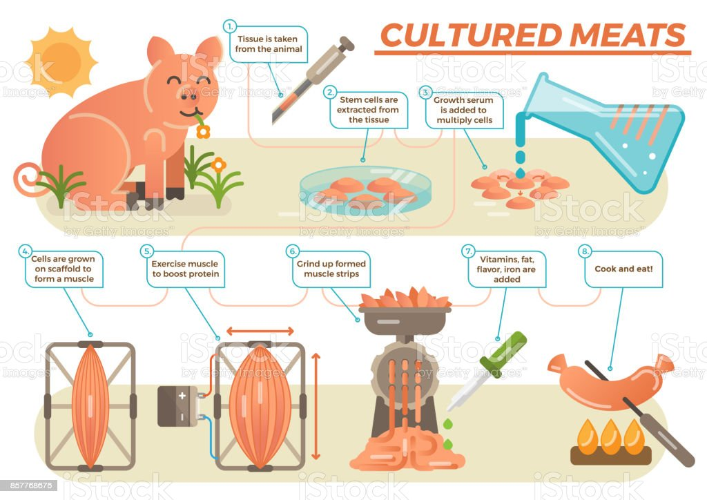 cultured meat 1 cultured meat if the 'dumb down' approach of animal disenhancement is the wrong way to go about addressing animal suffering, then perhaps the 'build up' approach is the right way.