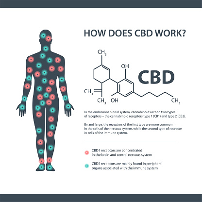 How does CBD works, white information banner with cannabidiol chemical formula and endocannabinoid receptors in the human body.