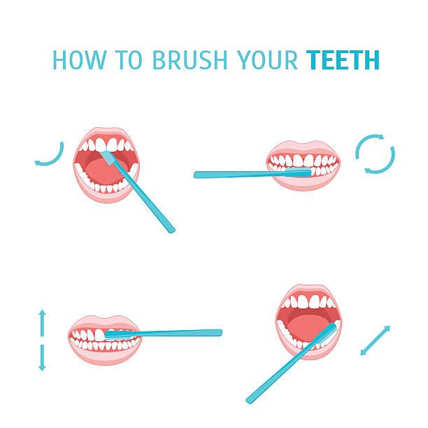 illustrazioni stock, clip art, cartoni animati e icone di tendenza di how to brush your teeth. vector - lingua umana