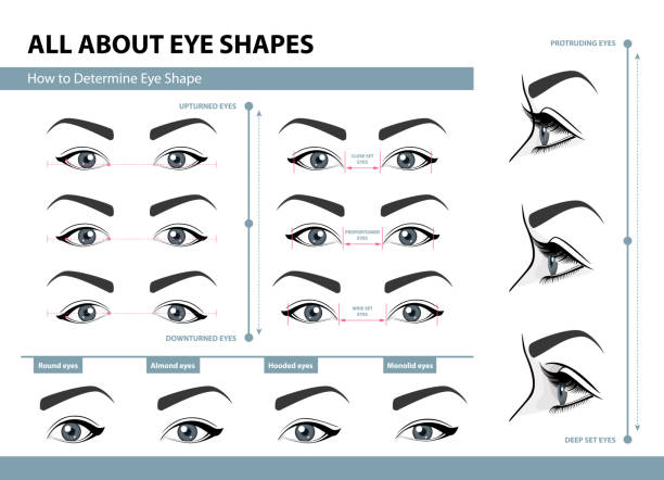 How to determine Eye Shape. Various types of female eyes. Set of vector illustrations with captions. Template for Makeup. Training poster How to determine Eye Shape. Various types of female eyes. Set of vector illustrations with captions. Template for Makeup. Training poster asian woman stock illustrations