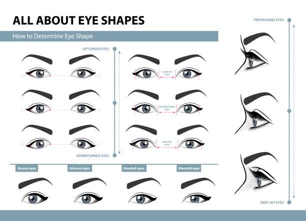 如何確定眼睛的形狀。各種類型的女性眼睛。帶標題的向量插圖集。化妝範本。培訓海報 - 睫毛 幅插畫檔、美工圖案、卡通及圖標