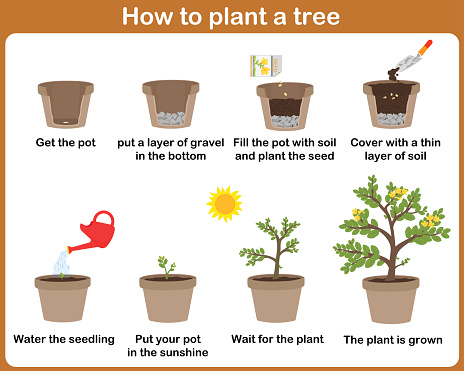 How to grow plants.