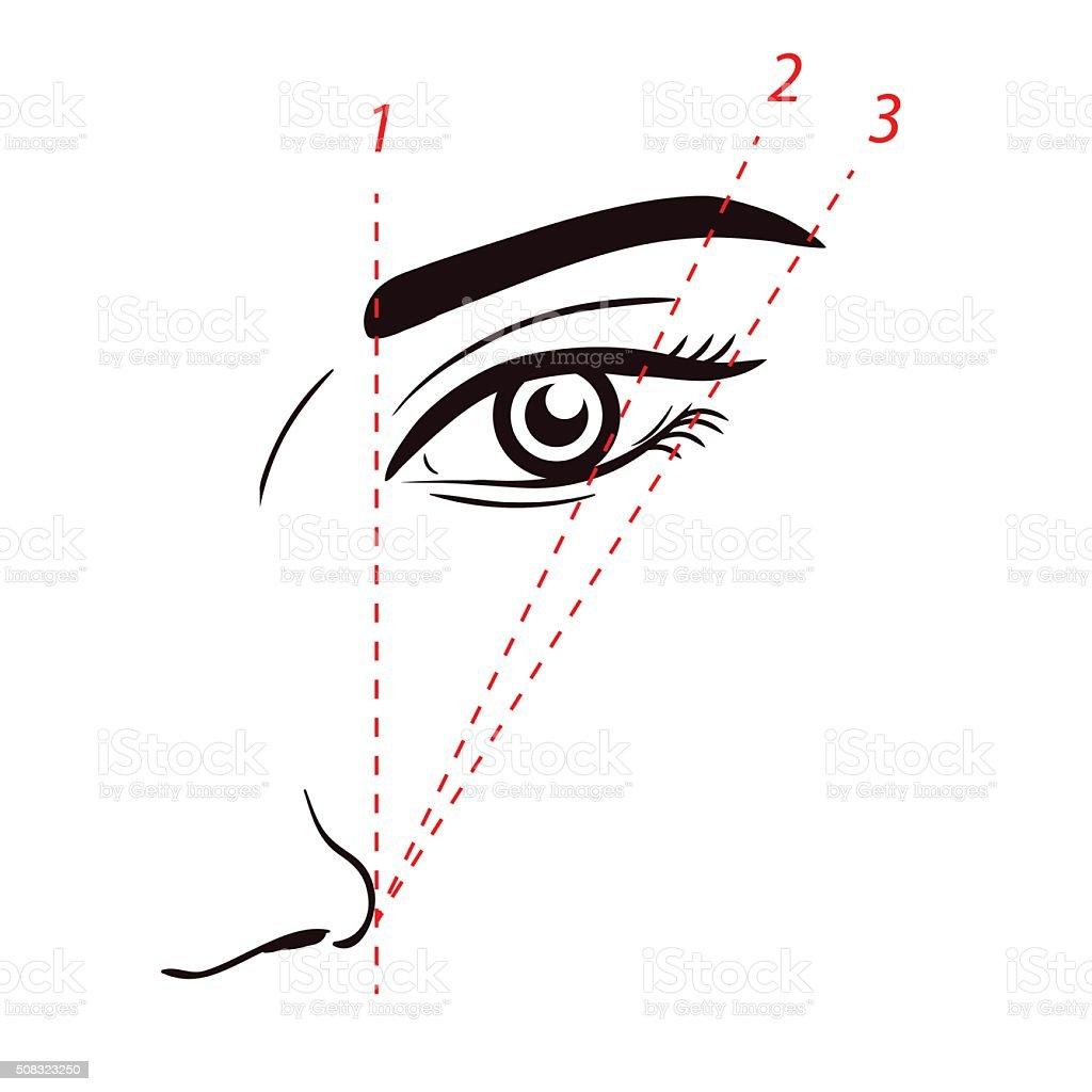 Wie Farbe der Augenbrauen. Formen der Augenbrauen, wie auf Gesicht – Vektorgrafik