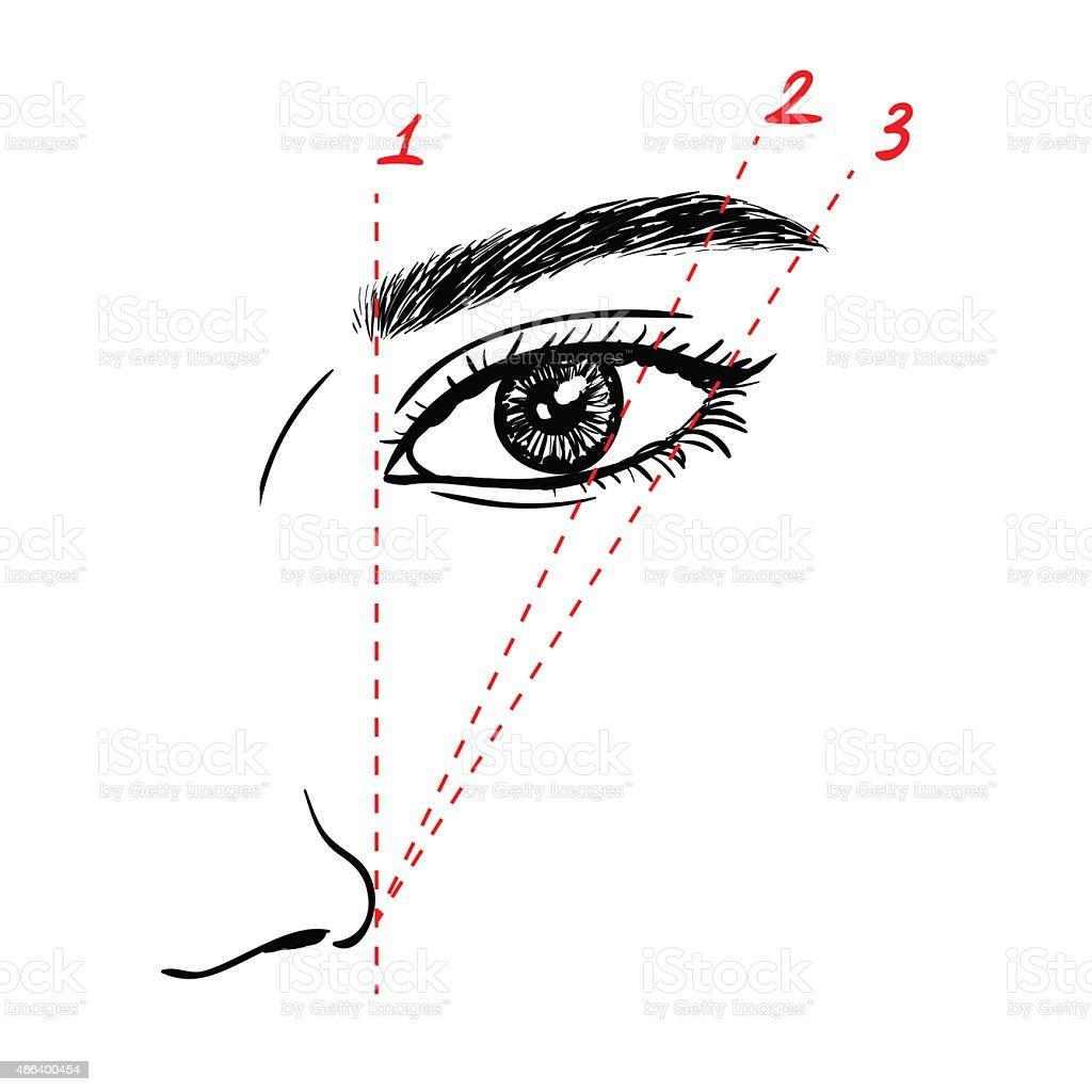 Wie Farbe der Augenbrauen – Vektorgrafik