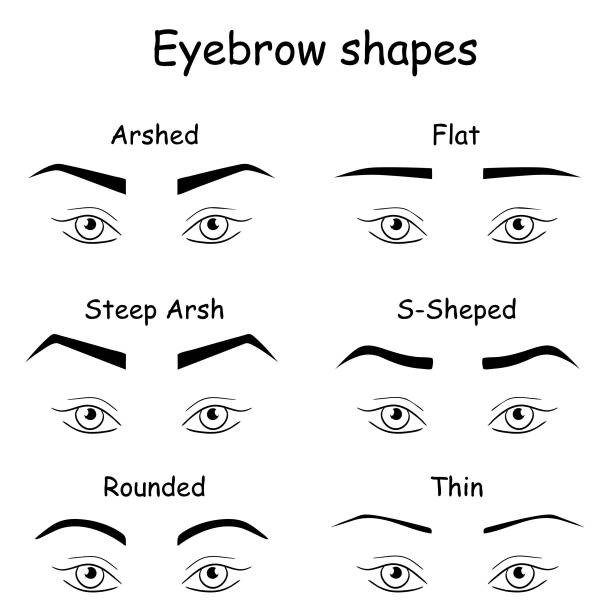 Royalty Free Arched Eyebrow Clip Art Vector Images Illustrations