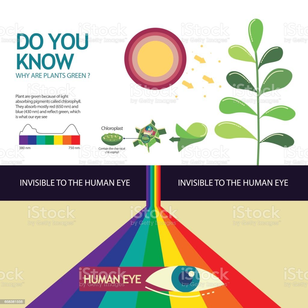 How you know why are plant green vector art illustration