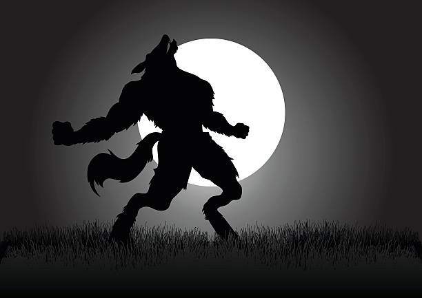Howling Werewolf Stock vector of a werewolf howling in the night during full moon werewolf stock illustrations