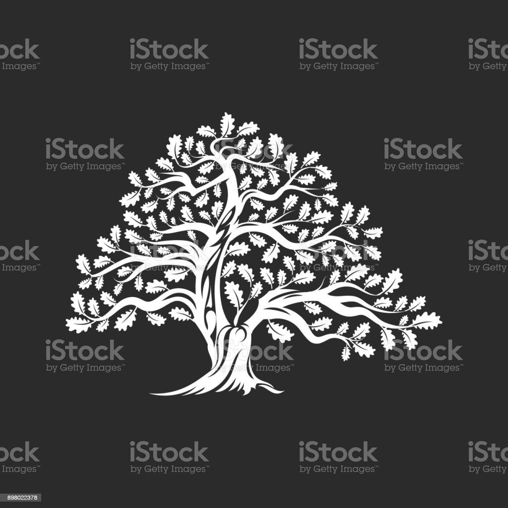Huge and sacred oak tree silhouette icon badge isolated on dark background. vector art illustration