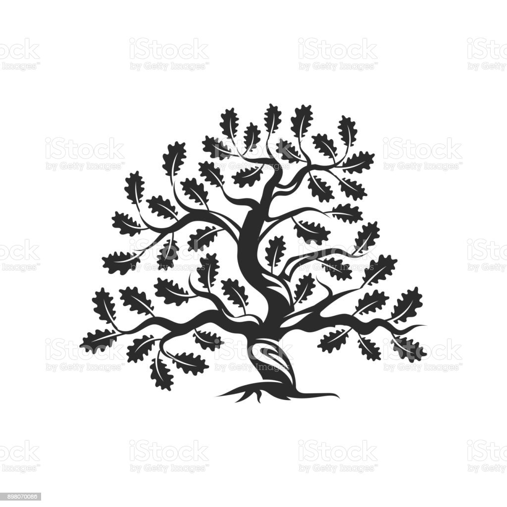 Huge and sacred oak tree silhouette icon badge isolated on white background. vector art illustration