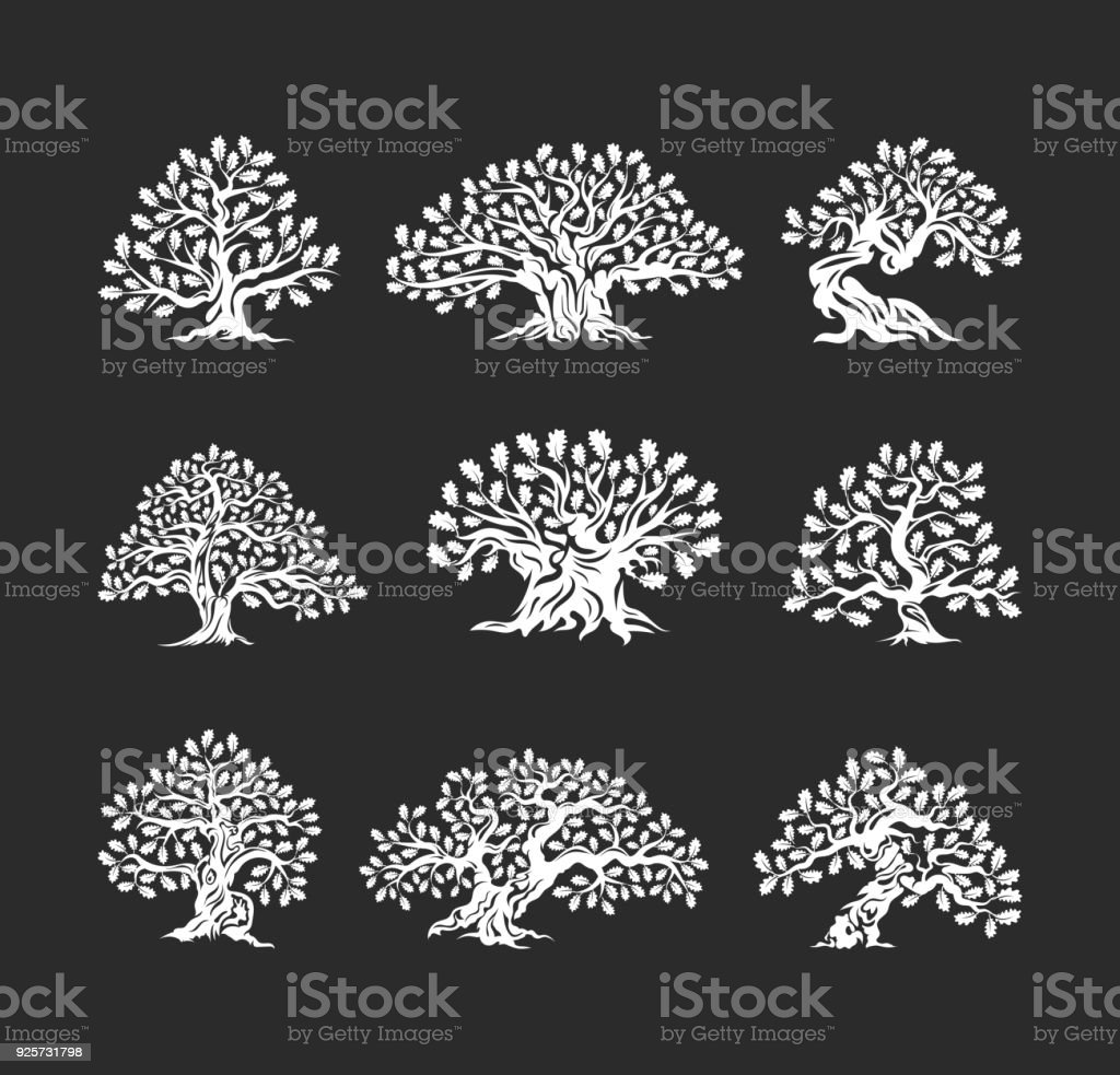 Huge and sacred oak tree silhouette icon isolated on dark background. - illustrazione arte vettoriale