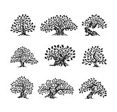 Huge and sacred oak tree silhouette icon isolated on white background. Modern vector national tradition green plant icon sign design set.
