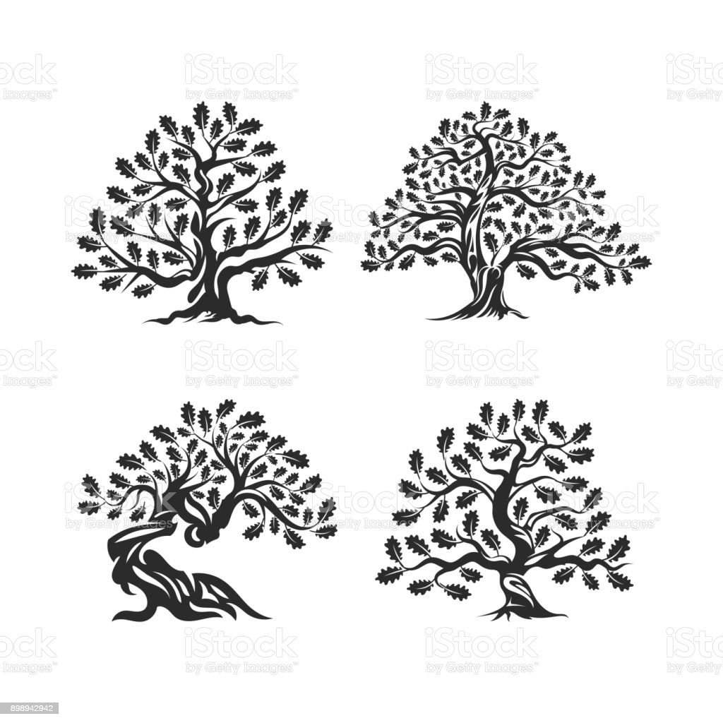 Huge and sacred oak tree silhouette   isolated on white background. vector art illustration