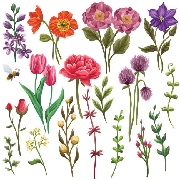 bildbanksillustrationer, clip art samt tecknat material och ikoner med enorm samling av blommiga inslag. - tulpaner