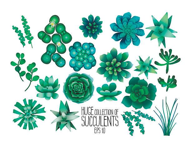 Gran colección de vector de plantas suculentas - ilustración de arte vectorial