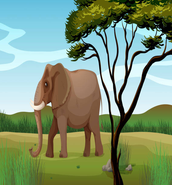 bildbanksillustrationer, clip art samt tecknat material och ikoner med huge elephant - single pampas grass