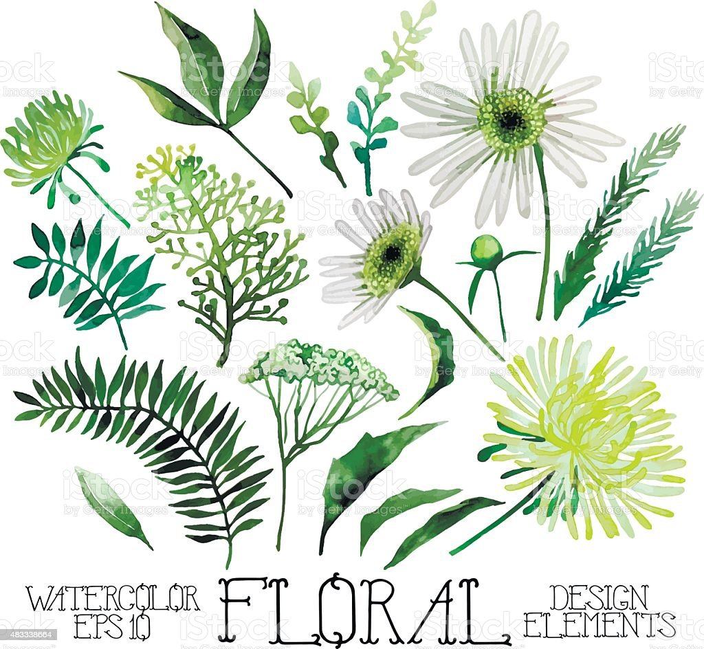 Huge watercolor green floral collection vector art illustration