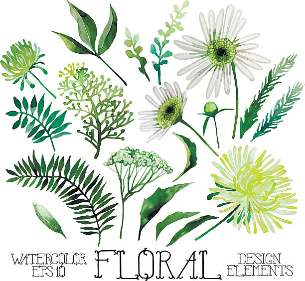 Huge watercolor green floral collection Huge watercolor green floral collection isolated on white background chamomile plant stock illustrations