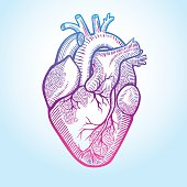 Human anatomical heart made in graphic art as laconic logo