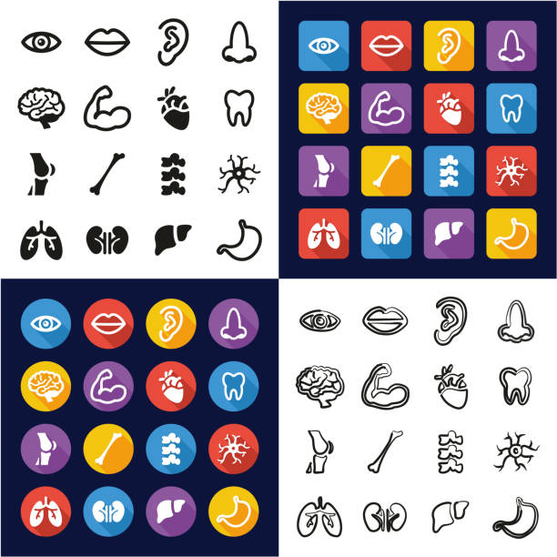 Human Anatomy All in One Icons Black & White Color Flat Design Freehand Set vector art illustration